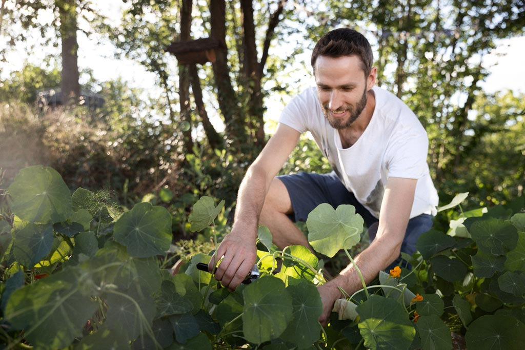 Mann arbeitet im Gemüsebeet